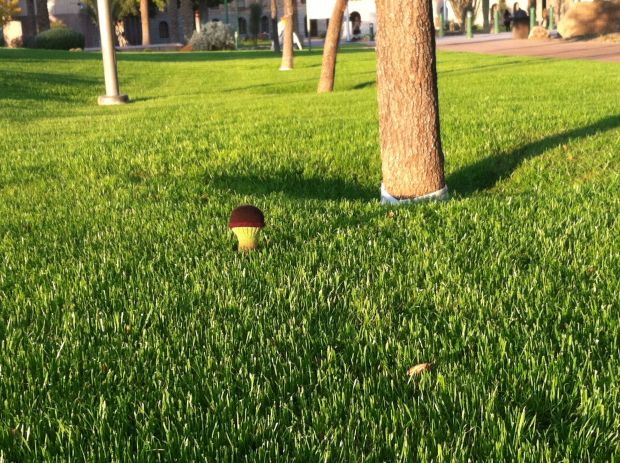 Knitted toadstool on a green lawn under a tree