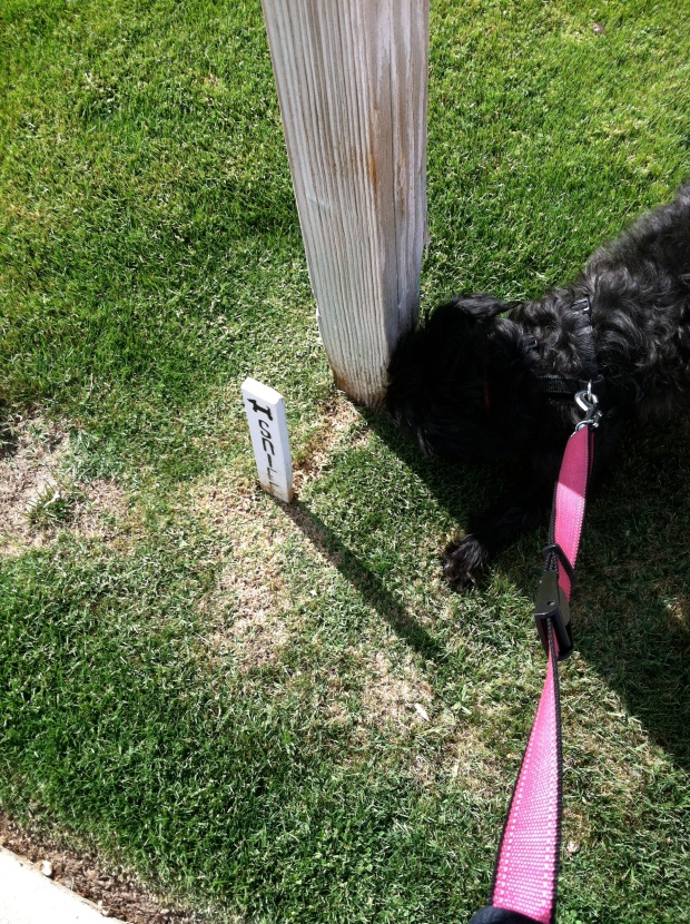 Small black dog smelling a mailbox post marked by a sign reading Sniff.