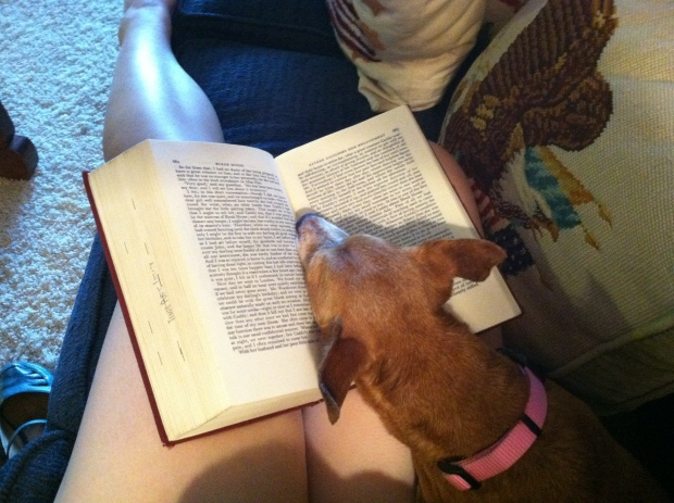 Small brown dog asleep on a book