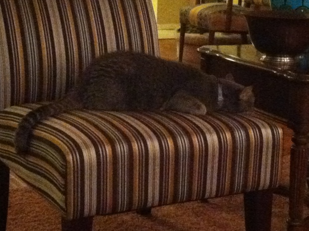 Large gray cat asleep on a striped chair