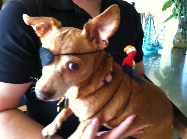 Brown dog with an eyepatch and a knitted parrot
