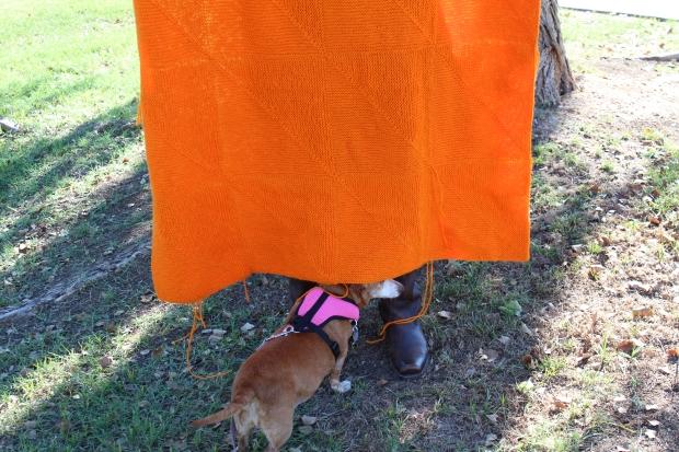 Small brown dog under an orange blanket