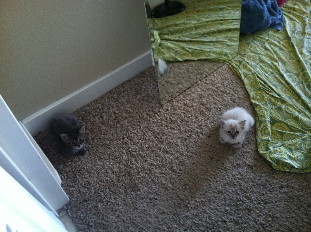 Two kittens sitting on the carpet