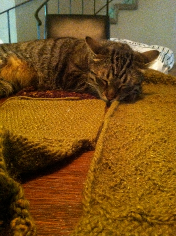 Tabby cat asleep on strips of knitted fabric