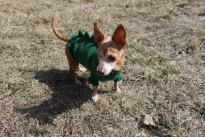 Melba in her Dogzilla sweater