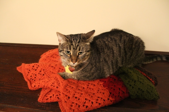 Tabby cat sitting on an orange, red, and green knitted wrap