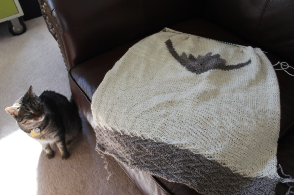 cat looking at knitting spread out on a couch