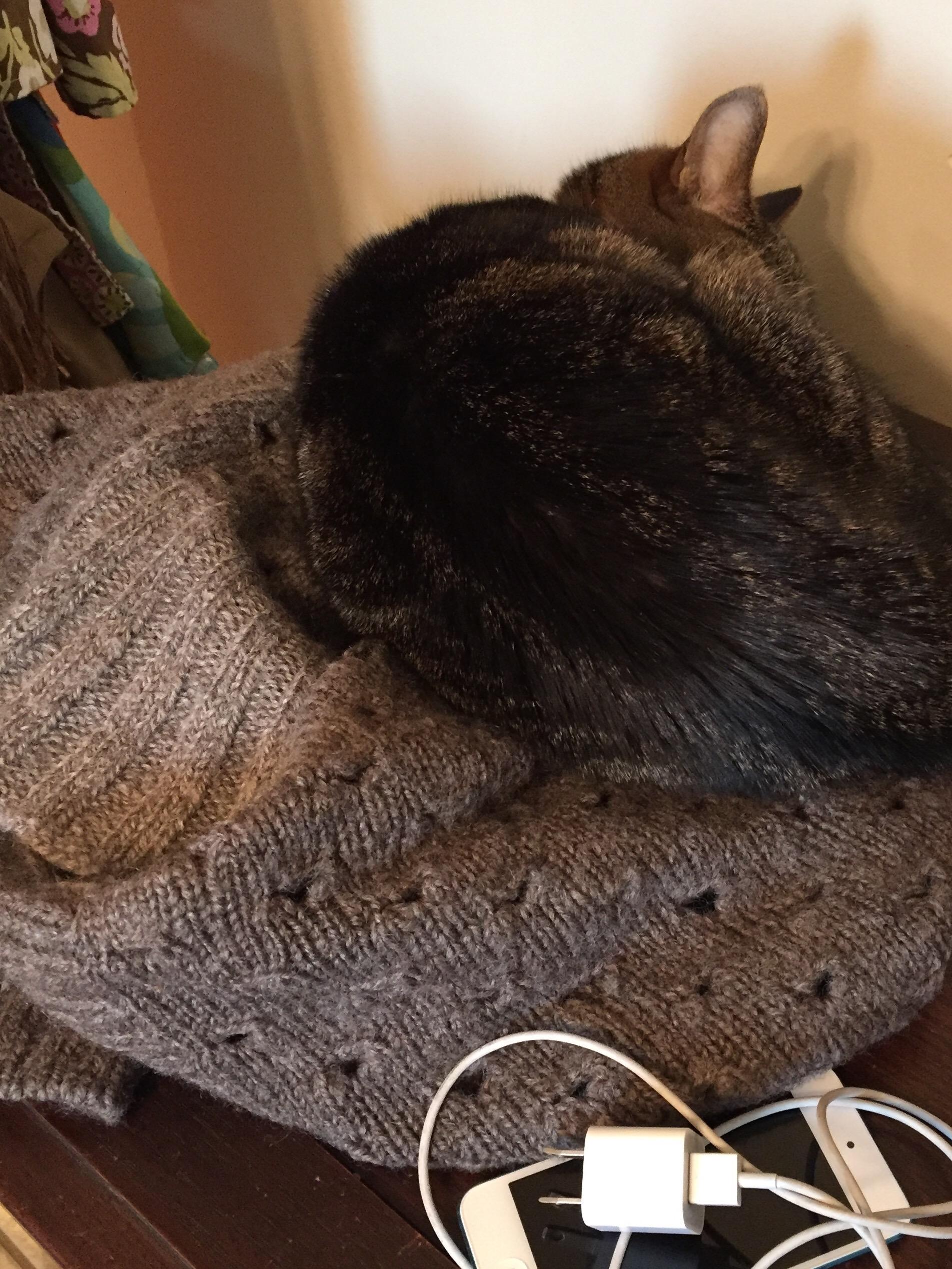Tabby cat asleep on a handknit sweater