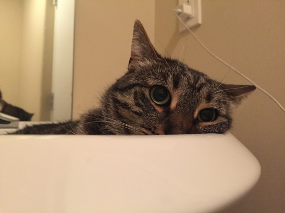 Tabby cat sitting in a sink with a sad face