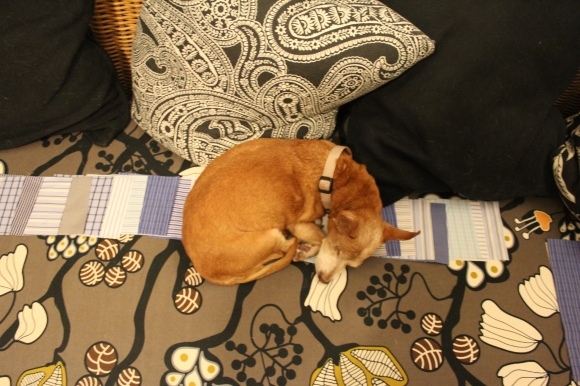 Melba the chiweenie asleep on squares of fabric