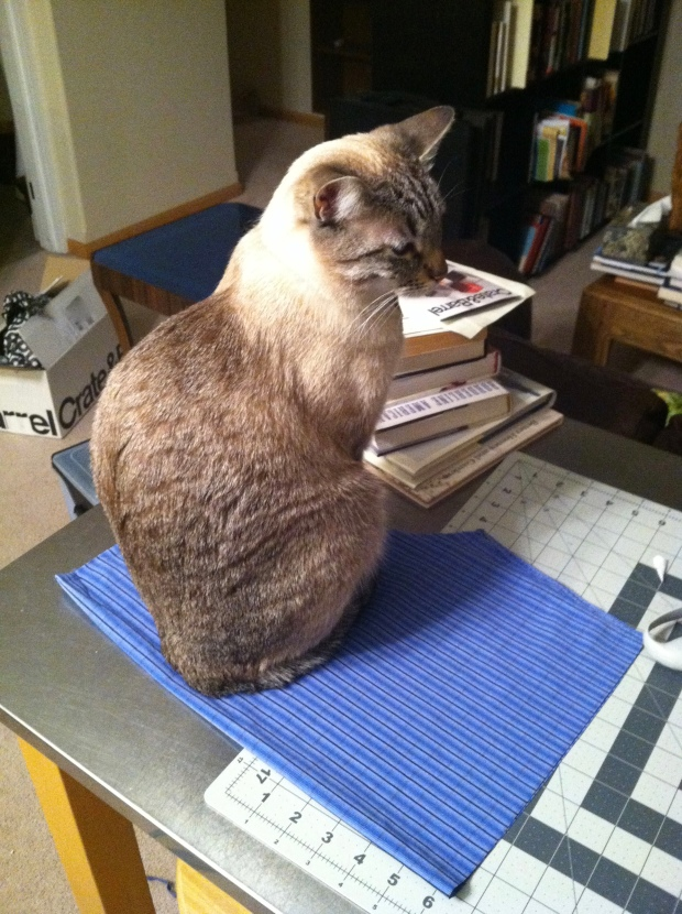 Cream colored cat sitting on a square of fabric