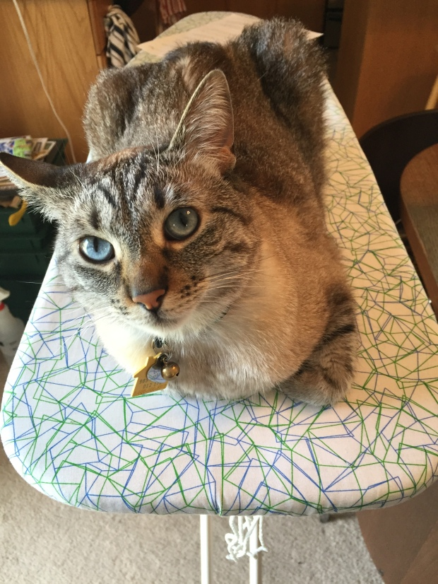 Cream colored cat on an ironing board