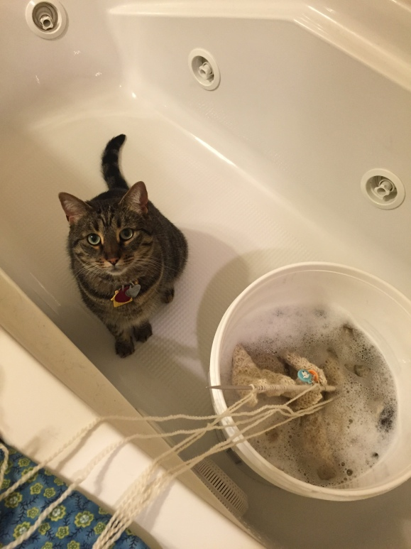 Tabby cat sitting in a bathtub with a blocking sweater
