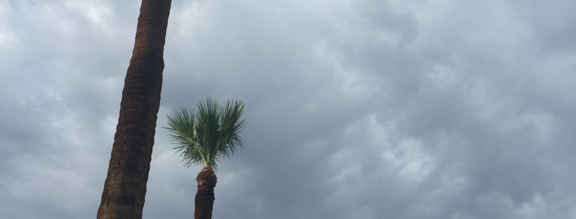 Palm trees against a dark, cloudy sky