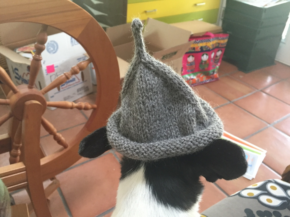 Black and white Chihuahua wearing a gray alpaca Little Sprout Baby Hat